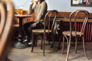 Person enjoying a pint of beer with a dog by their side