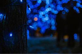 Blue tree lights