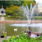 Lake Spring Park ducks