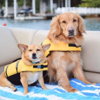 Two dogs wearing lifejackets on a boat