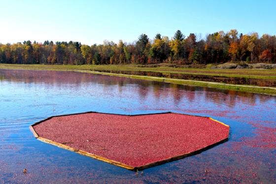 Johnston's Cranberry Marsh, Bala, Ontario